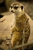 Untitled (Terry Demczuk) Tags: ontario canada canon eos xs torontozoo terrydemczuk zoologicodetoronto