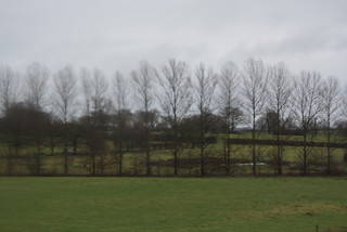 Un rideau d'arbres