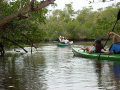 "Kayaking in the Mangroves • <a style=""font-size:0.8em;"" href=""http://www.flickr.com/photos/43501506@N07/6614007315/"" target=""_blank"">View on Flickr</a>"