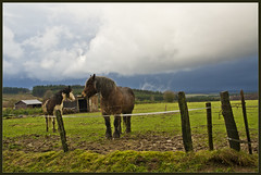 I think it's gonna rain today (Explore) (Bert Kaufmann) Tags: horses horse cloud rain weather clouds belgium belgique hill ardennen ardennes pluie belgi wolken hills pasture luxembourg wei pferde pferd bouillon luxemburg regen wetter weiland bui meteo paard paarden weer heuvel wallonie heuvels walloni dreigend donkerelucht dreigendelucht vivy