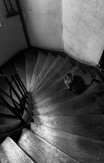 The French Cat On The Stairs (basselal) Tags: bw paris france monochrome stairs cat spiral 60225mm