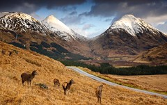 Glen etive (Kenny Muir) Tags: winter mountains landscape scotland glen deer glencoe mor etive beag buchaille