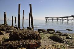 SAILING (DESPITE STRAIGHT LINES) Tags: wood sea canada beach water sailboat pier boat nikon rocks sailing bc shoreline posts sidney nikond700 ilobsterit