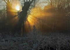 Frozen wonders (Robyn Hooz) Tags: trees winter light grass alberi canon eos golden frozen scene erba dew rays sole inverno effect rugiada scena luce oro raggi 600d ef1740l tindall micarttttworldphotographyawards micartttt michaelchee