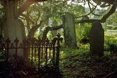(ethan) Tags: trees light film cemetery graveyard 50mm gold kodak graves analogue f18 praktica
