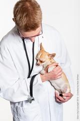 Marketing-photo-shoot-12 (Rob Orthen) Tags: dogs koiria roborthenphotography mainoskuvaus koirakuvaus