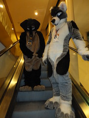 2012-FC-DeadDog-51 (thump45a) Tags: furry sanjose 2012 deaddog furtherconfusion fc2012