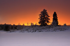City over yonder (Barry_Madden) Tags: trees winter snow silhouette suomi finland citylights talvi