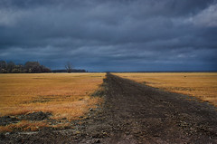 Golden Pastures along the path to Nowhere (BcLand) Tags: road winter field clouds ir path uv pasture infrared dirtroad ultraviolet stillness emptiness falsecolor lonelyroad fullspectrum goldengrass gloomyskies 28mmf35nikkor fujifilmispro