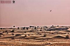 Lahbab Desert - Dubai (ashrafali photography) Tags: dubai dubaidesert lahbabdesert