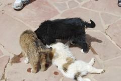 Puppy pile!