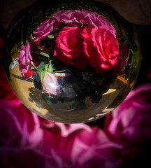 In my crystal ball... (judy dean) Tags: pink flowers roses petals contortion crystalball 2016 judydean sonya6000