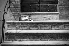 Per le viuzze di Trevi (Ale*66*) Tags: blackandwhite bw italy monochrome lines architecture cat trevi gatto architettura umbria linee