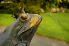 Trinkwasser (GerWi) Tags: nature stillleben wasser all outdoor brunnen natur frosch tier hanks botanischergarten trinkwasser