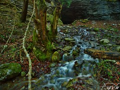 Aguas abajo (Alfer520) Tags: paisajes naturaleza musgo verde nature hojas landscapes agua arboles bosque troncos piedras cueva ramas alfer520