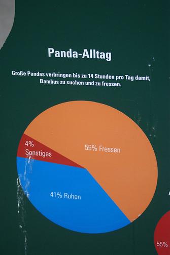 Panda-Alltag (Tiergarten Schönbrunn)