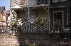 roses du voisinage (JJ_REY) Tags: street leica roses house neighborhood m8 maison rue voisinage elmarit28mmasph