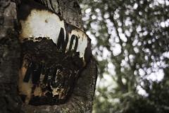 Sign eating tree (mark.mcgimpsey) Tags: tree texture sign night fishing nikon rust no rusty oldsign manvsnature d800 reclaimed reclaim naturewins nikond800