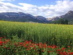 Amapolas, Vilanova de Mei (efe Marimon) Tags: primavera amapolas montsec vilanovademei appleiphone4s felixmarimon