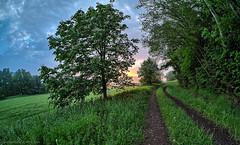 Another New Morning Has Broken (DokuDoc) Tags: light sun tree nature fog germany landscape bayern deutschland bavaria licht nebel natur meadow wiese landschaft sonne walimex baum oberpfalz rokinon upperpalatinate samyang12mm120 bergbeineumarktinderoberpfa bergbeineumarktinderoberpfalz
