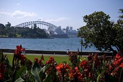View from the Royal Botanic Gardens (jdmiller83) Tags: weather gardens harbor harbour great sydney royal australia nsw operahouse harbourbridge botanice