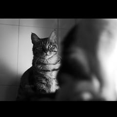 (Clea.ma) Tags: life love cat kitten live 貓 生活 clea 貓咪