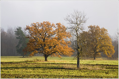 20111025. Rangu - Orgita. Fall. Sunshine after fog. 9492. (Tiina Gill (busy)) Tags: autumn tree fall fog landscape estonia vanagram