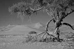 Dunes of Sesriem-Sossusvlei NP | 7