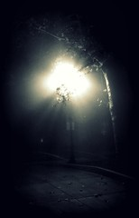 fog/light (Swede1969) Tags: oneaday photoaday 365 pictureaday 2011 project365 365project onephotoaday project365331 2011yip 3652011 project365112711
