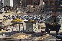 Street Vendor, Jaipur (Ramesh_Thadani) Tags: streetvendor ambulante vendedorambulante cidaderosaindiaindiatrip2011indienjaipurk5pentaxpentaxk5pinkcityrajasthanrosafarbenestadttaubeambulantepidgeonpombostreetvendorpentaxk5k5