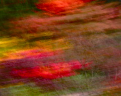 in the air (I) (pstao1) Tags: seattle trees fall dream icm intentionalcameramovement