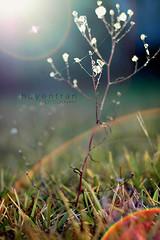Day 83 (huyen-tran) Tags: sun cold nature grass photography cool warm flare sunflare