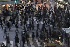 (quashlo) Tags: tokyo neon shibuya pedestrian   crosswalk scramble     shibuyaward
