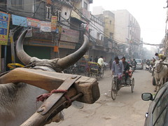 K4 - Cows and rickshaws, Old Delhi (omnia2070) Tags: delhi olddelhi bicyclerickshaw
