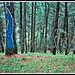 se llegó al bosque pintado