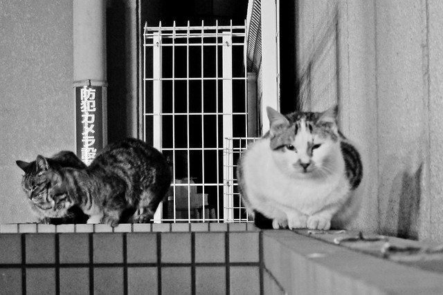 Today's Cat@2011-12-16