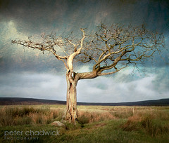 Death on the Moor (PeterChad) Tags: cold tree texture broken weather canon dead death peace spirit decay dry bleak spiritual moor leafless desolate mighty desolation flypaper