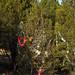 360_Trees_2011_071
