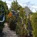 360_Trees_2011_085
