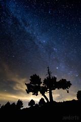 Zeruari begira (anderto) Tags: estrellas nocturna zb pirineos pirineoak izarrak larrabelagua pinonegro valactea esnebidea pinubeltza canonikos gabekoak