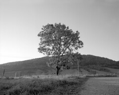 A tree at sunset. (wojszyca) Tags: sunset bw orange mountains tree mamiya nature mediumformat landscape 50mm kodak 14 poland filter epson lonely 6x7 bieszczady gossen plusx rz67 125px 4990 ddx 6min ilfotec smolnik lunaprosbc