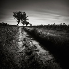 Dirt Track (Andy Brown (mrbuk1)) Tags: longexposure trees light shadow motion blur france contrast square landscape mono countryside blackwhite vineyard movement vines mood wine wind path perspective dramatic windy trail lowkey lead grape languedocrousillon neutraldensity
