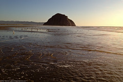 Morro Strand State Beach during an ultra-low tide.