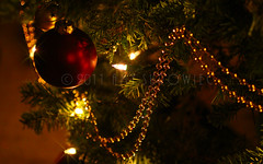 Merry Christmas! (bunnyfrogs) Tags: christmas light red usa holiday tree bulb strand ball gold golden colorful warm glow texas bokeh tx decoration houston garland ornament fir bead rays merry needles beams noble