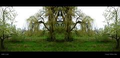 Creepy Willow Man (The Pootie (Lisa)) Tags: tree green nikon willow mirrorimage landsape d7000