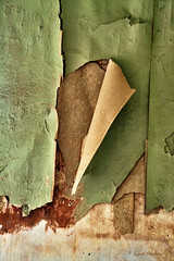 Exfoliation (walla2chick) Tags: wallpaper usa wall hotel washington store peeling fieldtrip wa palouse peelingpaper topazadjust topazadjust5 photoconvention thebankleftgallery 024tpza5