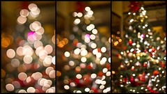 Day 82-A (Aina.H) Tags: christmas canon 50mm holidays christmastree christmaslights f18 vacations winters 550d christmasbokeh project365days