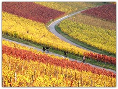 Autumn Vineyard (Habub3) Tags: park street travel autumn red people holiday color rot fall texture nature yellow canon germany garden landscape deutschland vineyard flora europa europe stuttgart path urlaub herbst natur vine menschen gelb blatt landschaft garten bunt vacanze 2012 weg reise wein farben weinberg g12 rotenberg leav strase habub3 mygearandme