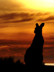 Iconic Silhouette || Kangaroo At Sunrise (rhyspope) Tags: ocean new morning sea orange cloud sun lake black beach nature water grass animal silhouette wales clouds canon fur point landscape evening coast marine skies afternoon natural native ripple wildlife south horizon wave australia ears potato kangaroo wallaby nsw coastline aussie roo saltwater moruya 500d narooma eurobodalla rhyspope