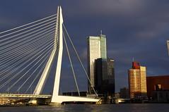 before the storm (Joey Johannsen) Tags: light urban river rotterdam bright thenetherlands scene maas contrasts erasmusbridge darkblueskybeforethestorm